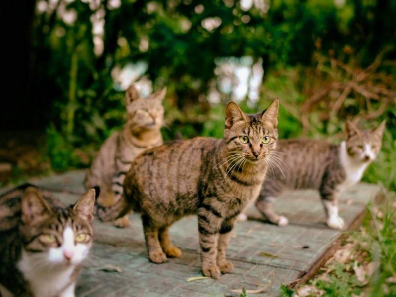 44-Cats-770x577